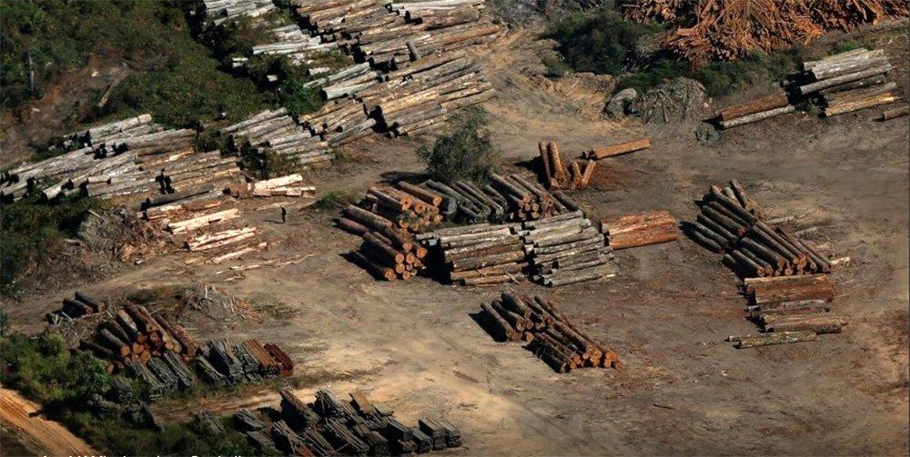Com cartazes pró-Bolsonaro, madeireiros expulsam fiscais do Ibama