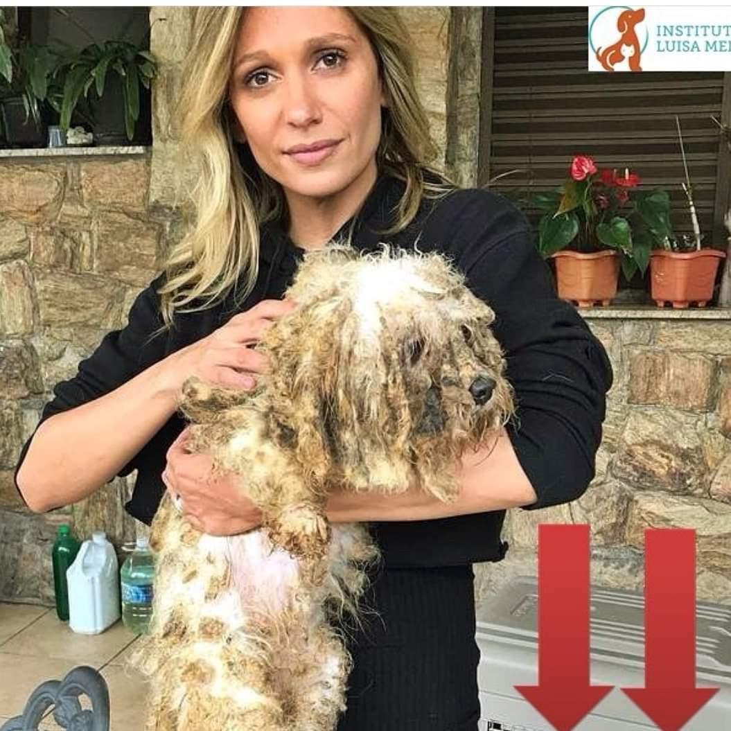 A crueldade e a criminalidade por trás da criação dos cães de raça vendidos em Pet Shops