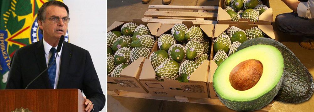 Bolsonaro comemora abertura do mercado argentino ao abacate brasileiro, que representa 0,007% das exportações