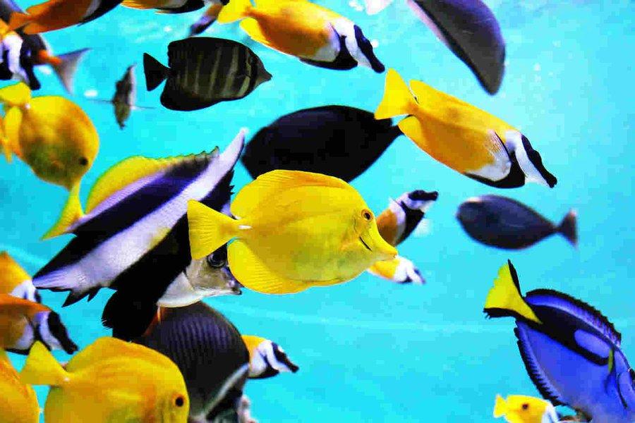Ministério da Agricultura pede fim da lista de animais aquáticos ameaçados