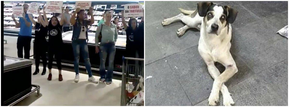Carrefour pagará R$ 1 milhão por morte da cadela Manchinha