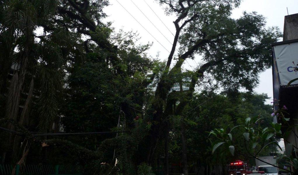 Queda de árvore atinge rede de trólebus em São Paulo