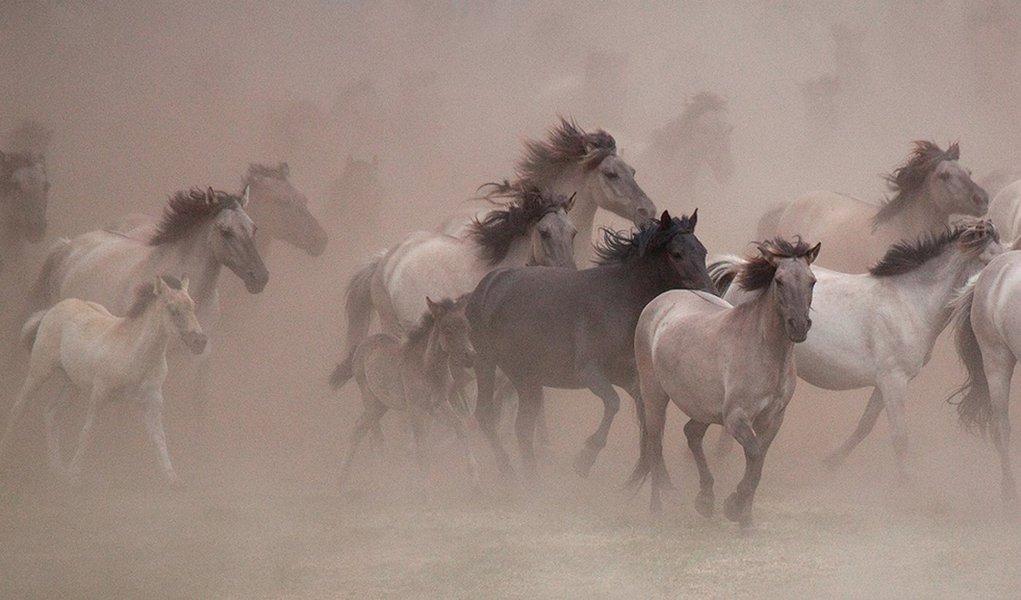 Família alemã protege os últimos cavalos selvagens europeus