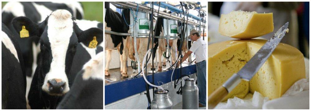 Cadeia do leite é a que mais evita êxodo rural no RS