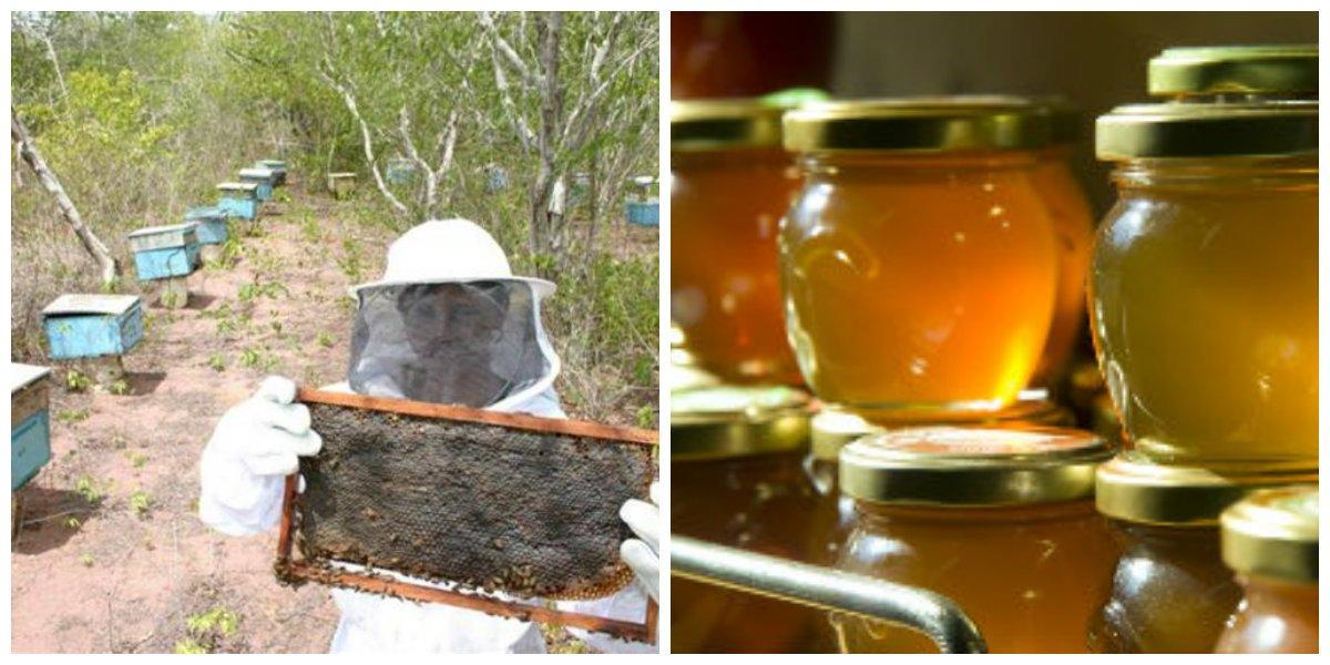 Incentivo para transformar mel em ouro