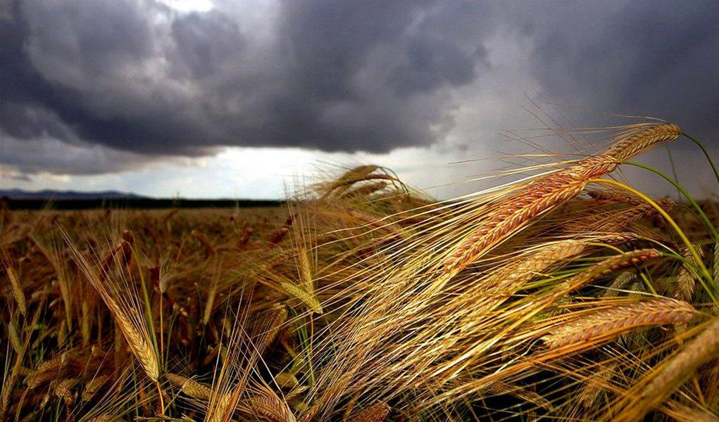 Açúcar, cereais e óleos estimulam preços dos alimentos, diz FAO