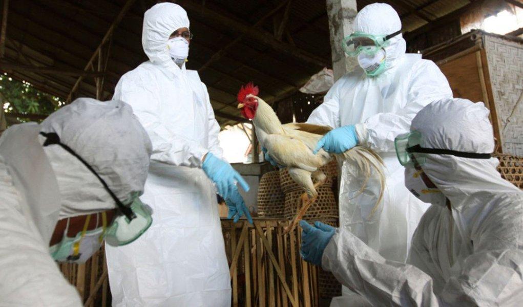 China se mobiliza no combate a nova gripe aviária