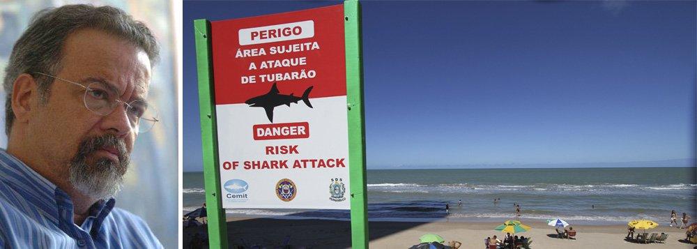 Vereador aciona Suape por ataque de tubarão
