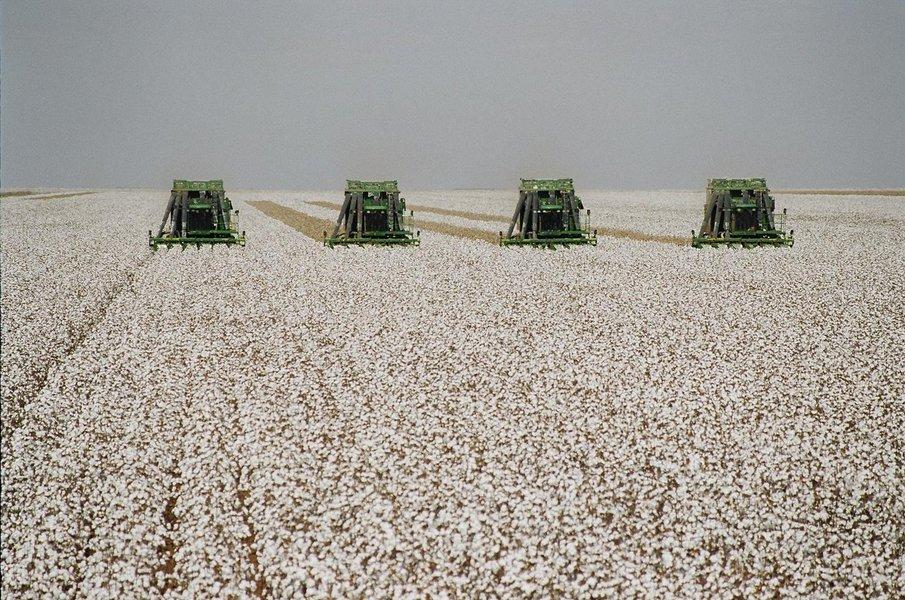 Minas é referência mundial na avaliação do algodão