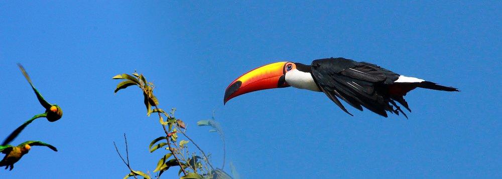 Mídia quer, agora, que tucanos abram o bico