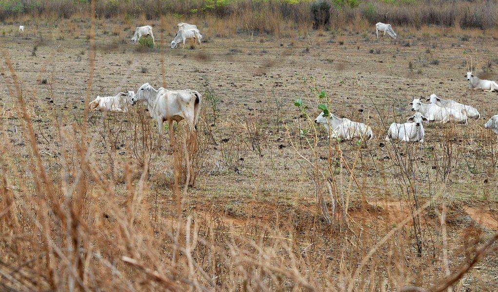 Nordeste tem a pior seca das últimas décadas