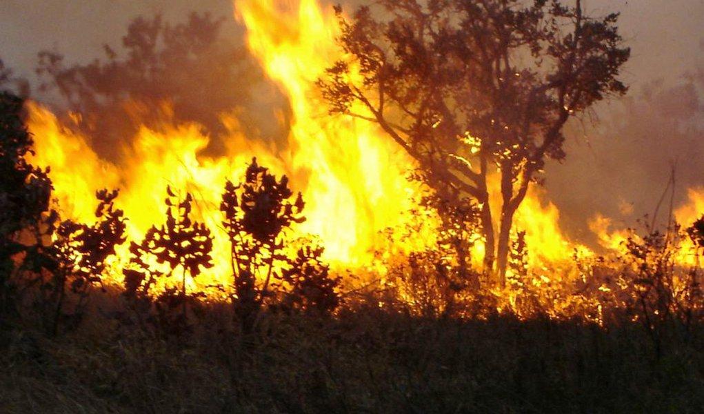 Aumento de queimadas neste ano chega a 61%