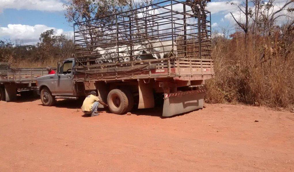 Furto de gado é frustrado pela PM em Arraias