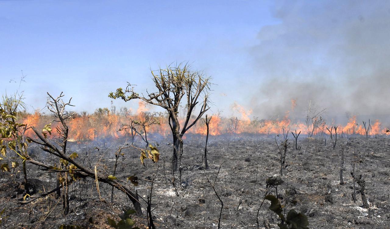 Focos de queimada no AM são 85% maiores que média de 18 anos