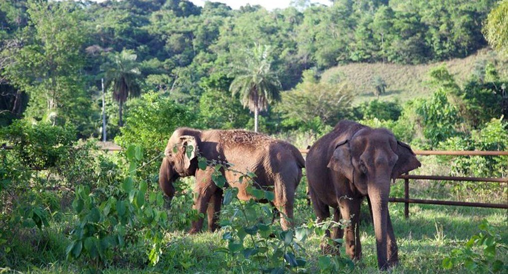 Após maus-tratos, elefantas são libertadas em novo santuário brasileiro