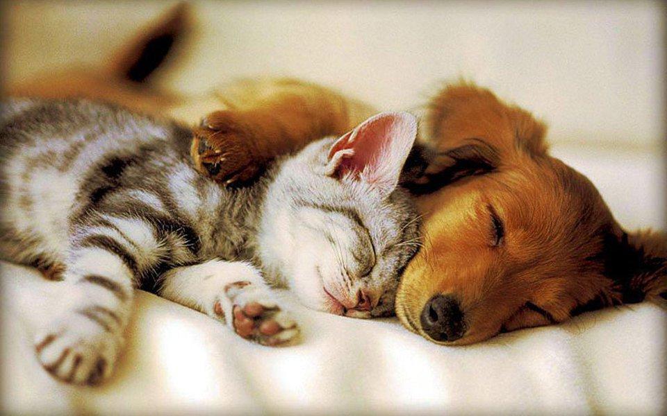 Dormir bem. Promessa para uma saúde melhor