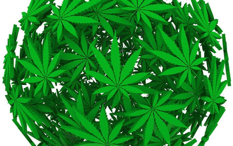 Maconha clínica. Benefícios e danos da cannabis