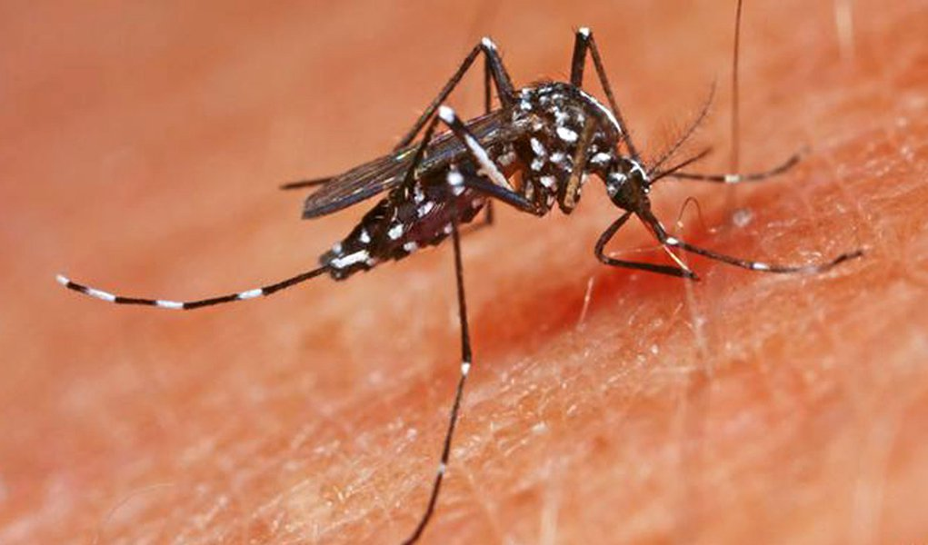Disparam no Brasil mortes por chikungunya