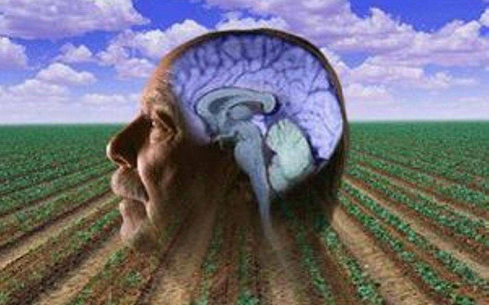 Mal de Parkinson. Pesticida é importante fator de risco