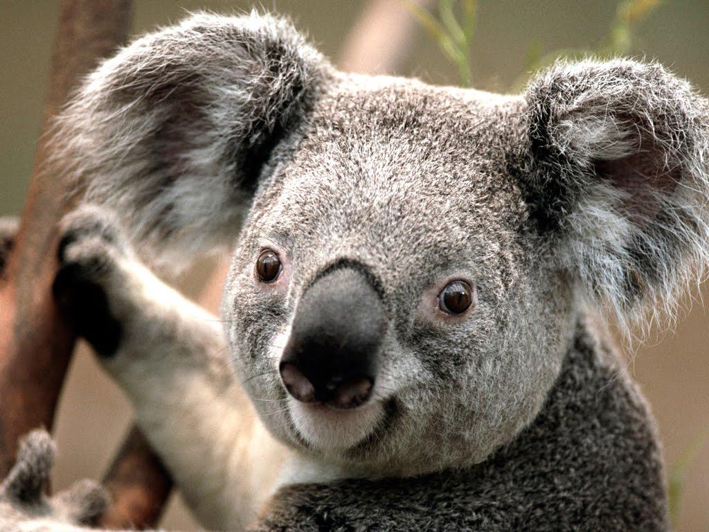 Campanha quer atrair mais turistas para a Austrália