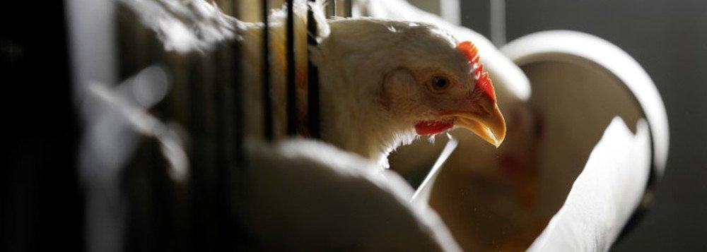 China estende por 6 meses investigação antidumping sobre importação de frango do Brasil