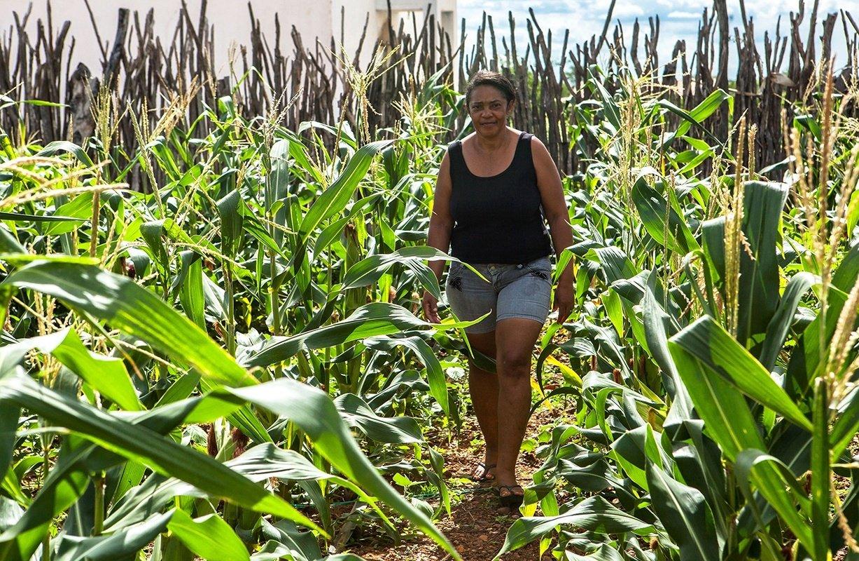 Reforma da Previdência pode impedir aposentadoria rural