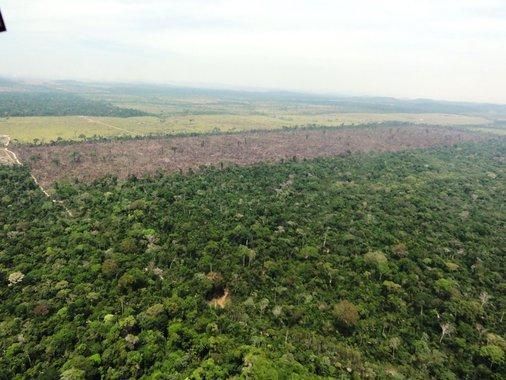 Desmatamento na Amazônia cresce 215%