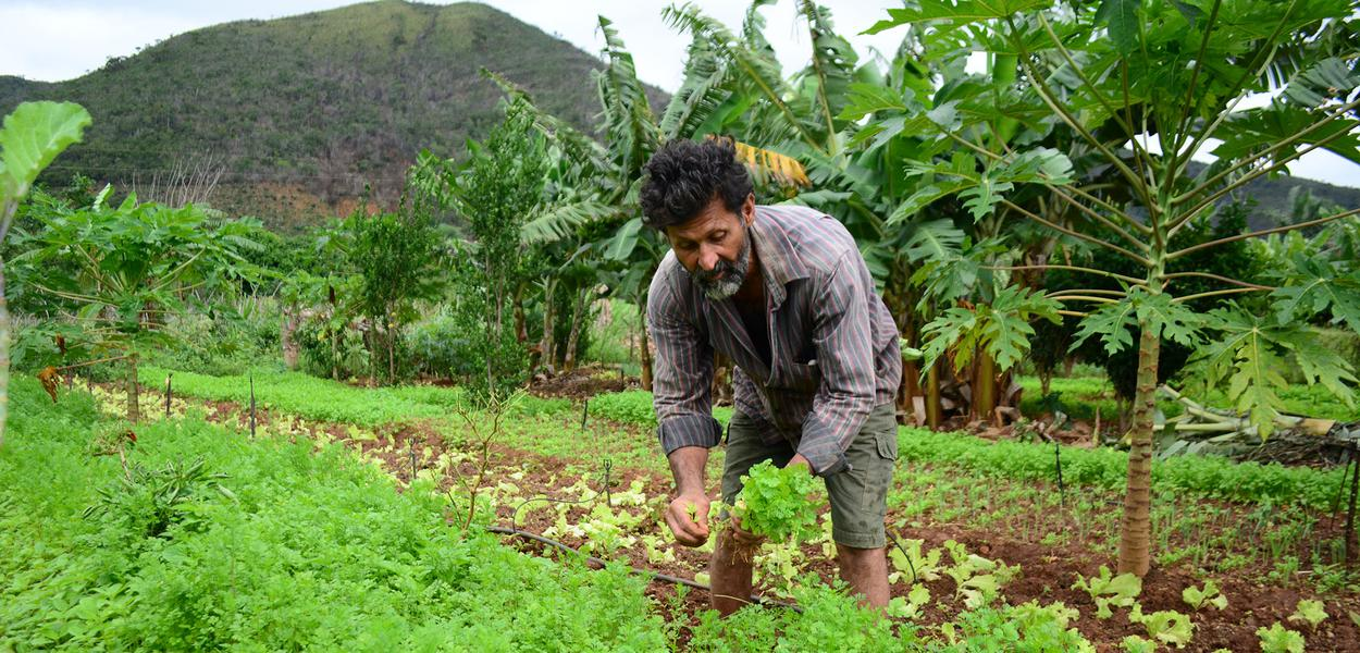 agricultura familiar e desenvolvimento rural da Bahia