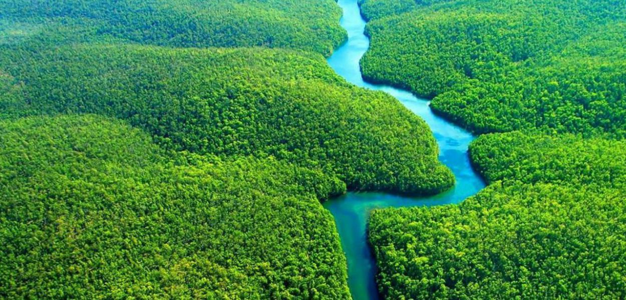 Floresta Amazônica: templo da biodiversidade planetária