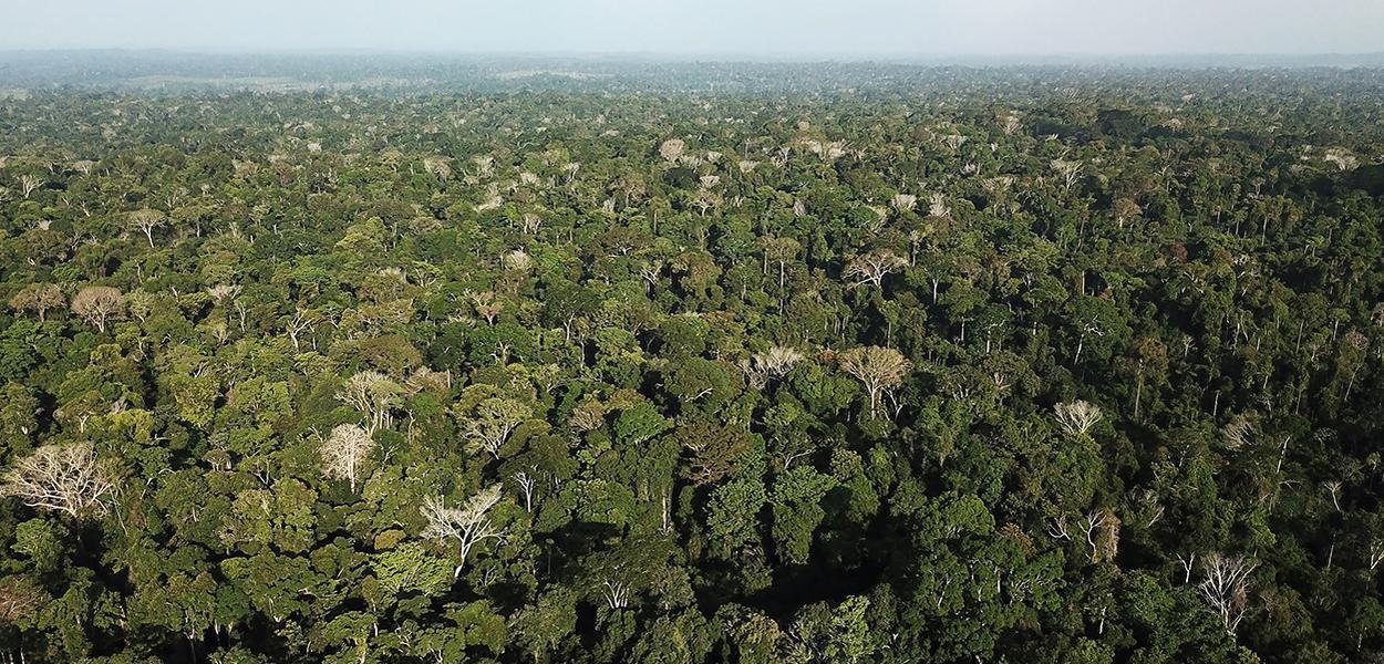 Vista aérea da Amazônia perto de Altamira, no Pará