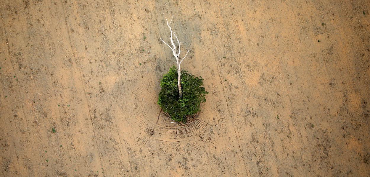 Trecho desmatado da floresta amazônica perto de Porto Velho