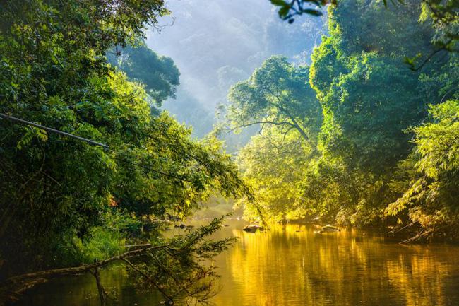 Rio corta a floresta tropical