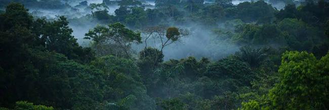 Névoa na floresta pluvial