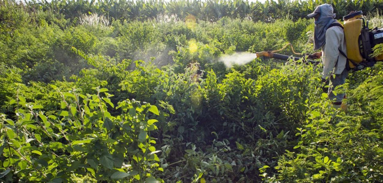 Funcionário aplica agrotóxico em pequena fazenda em Limoeiro do Norte, no Ceará
