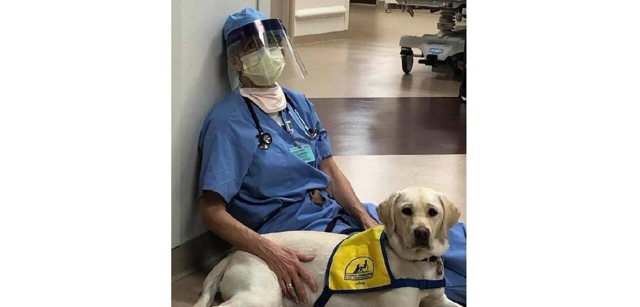 Profissional da saúde com cão terapueta
