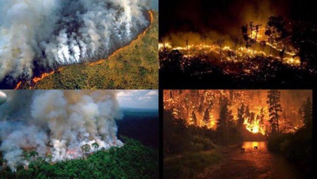 Incêndios na floresta amazônica