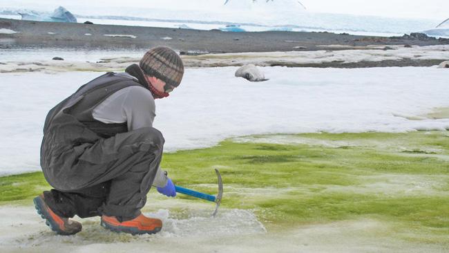 Investigando uma colônia de algas verdes