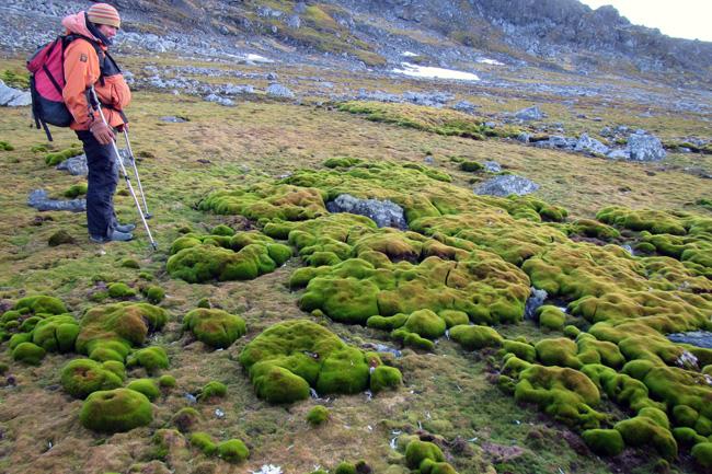 Também as gramíneas avançam no litoral da Antártica