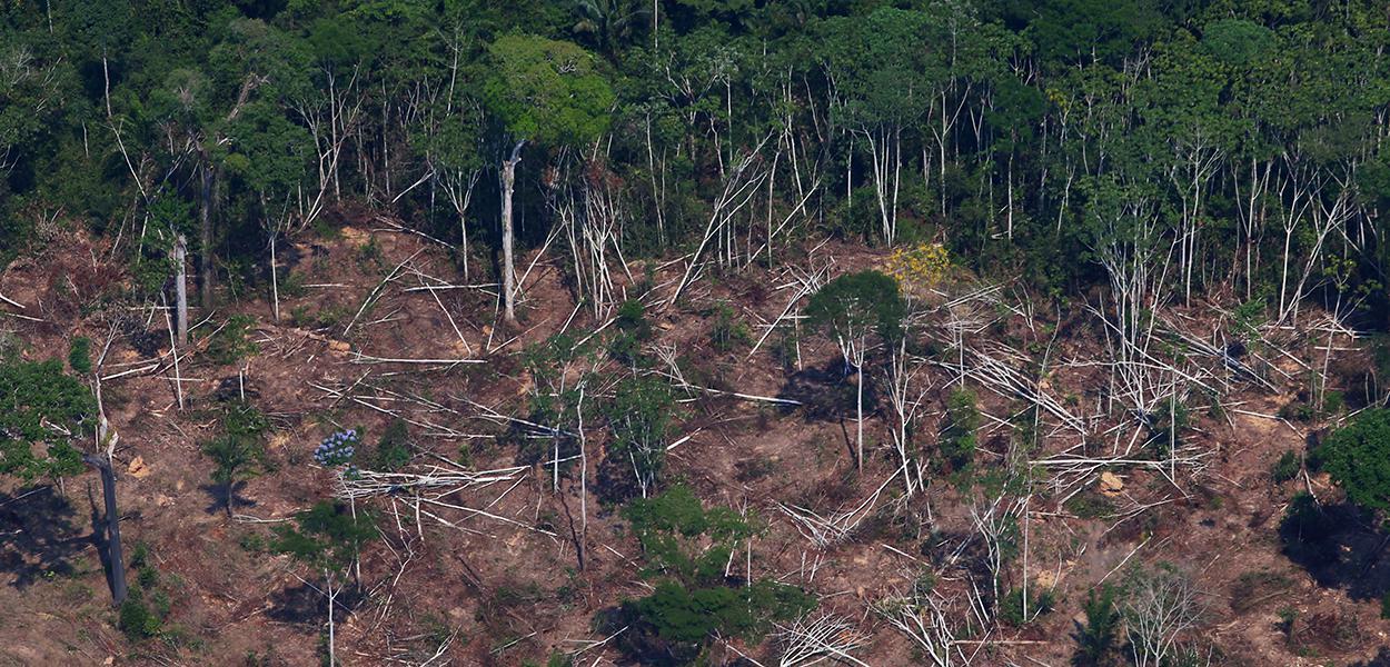 Floresta amazônica, perto de Novo Progresso, Pará.