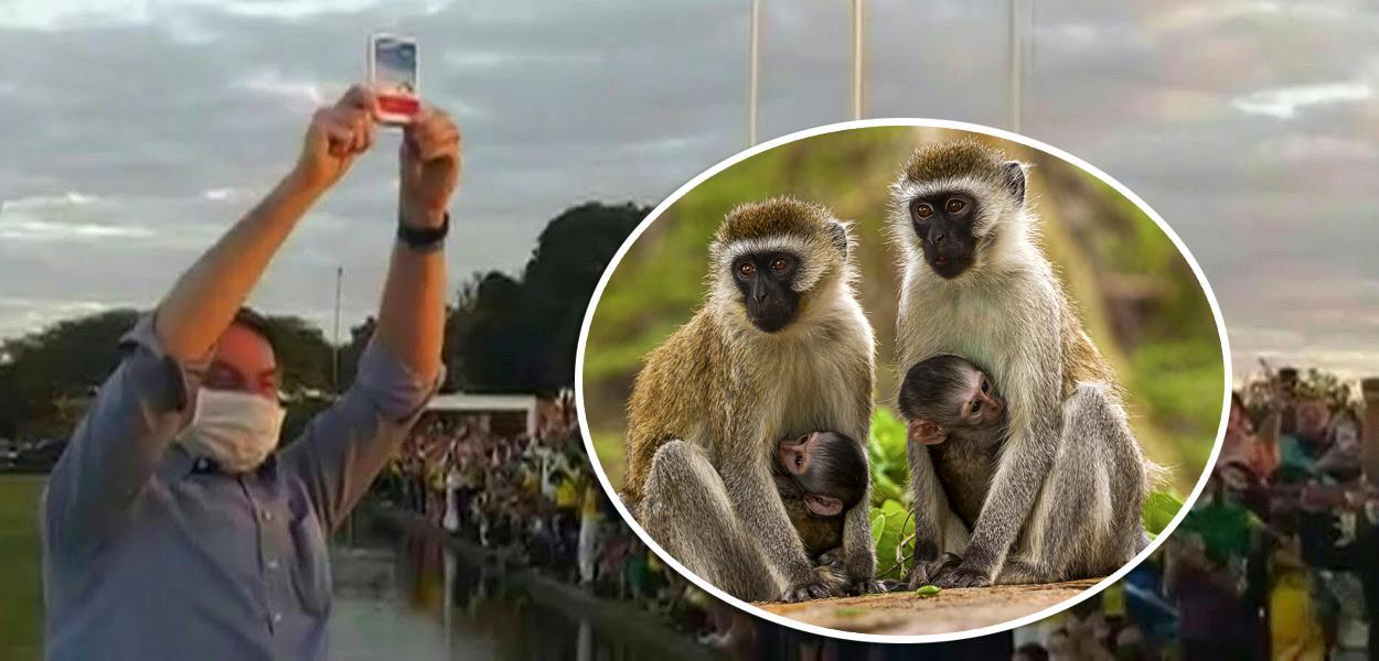 Bolsonaro mostrando caixa de cloroquina e macacos verdes da África