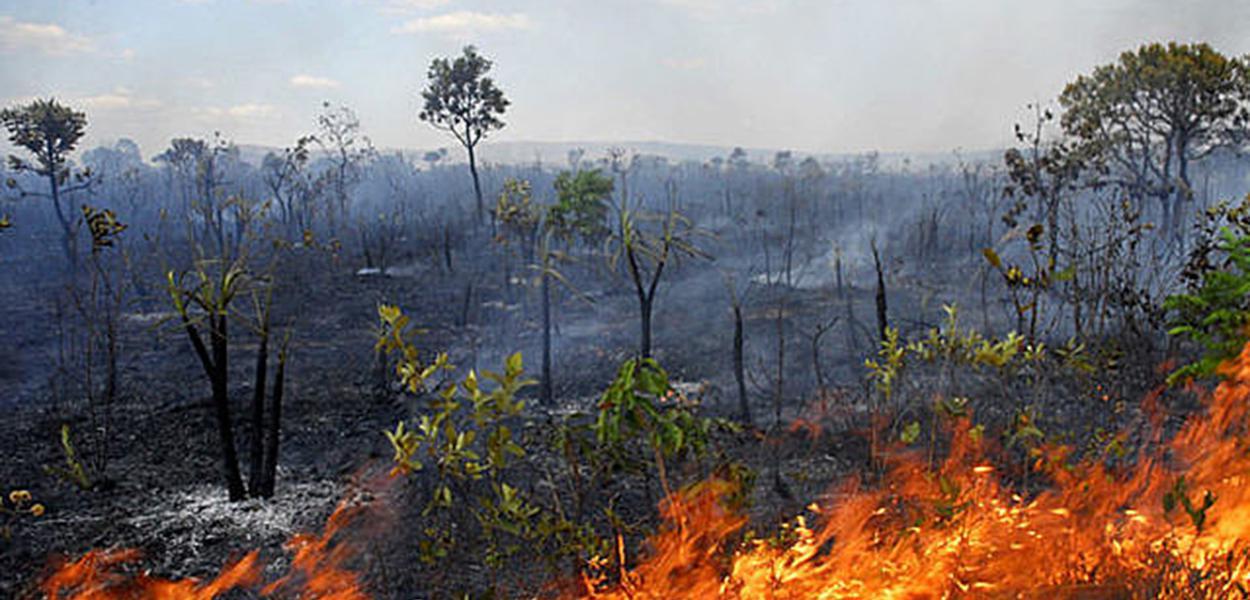 Aumenta desmatamento no Cerrado