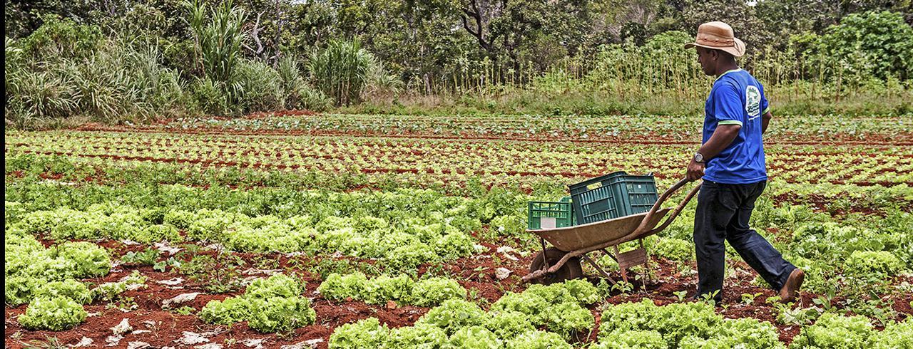 Governo Bolsonaro suspende financiamento para agricultura familiar