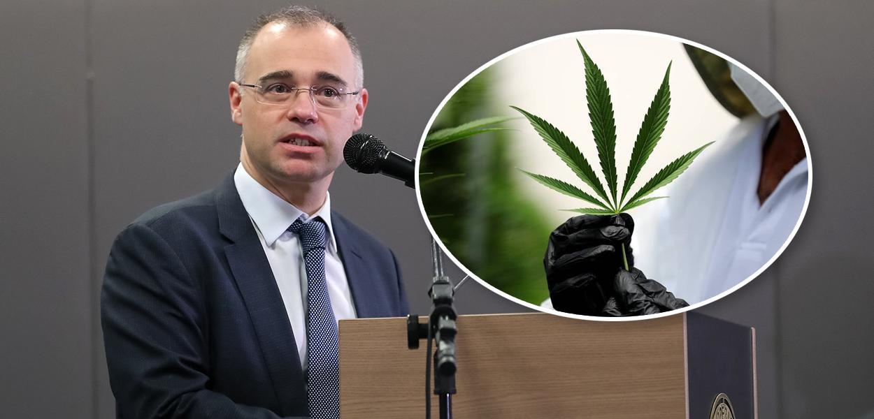 André Mendonça e folha de cannabis