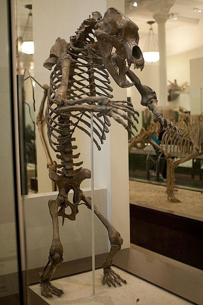 Esqueleto de um exemplar de urso das cavernas