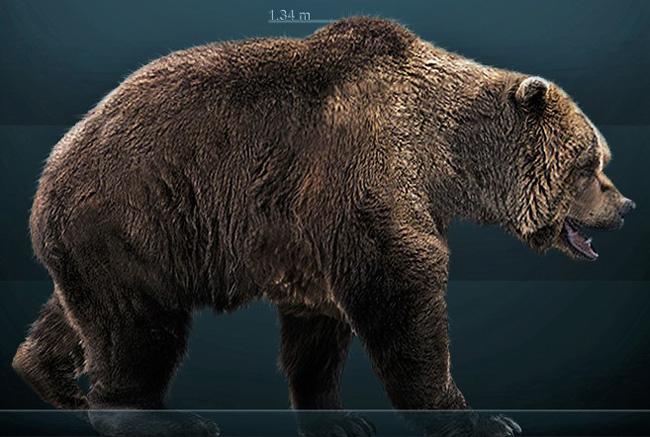 Ilustração de um exemplar de urso das cavernas