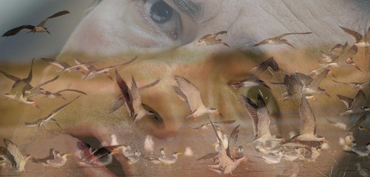Migração de marrecos