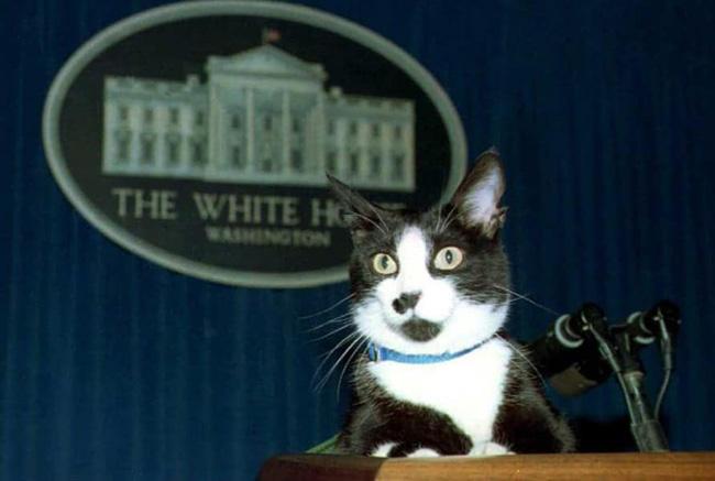 O gato de Bill Clinton