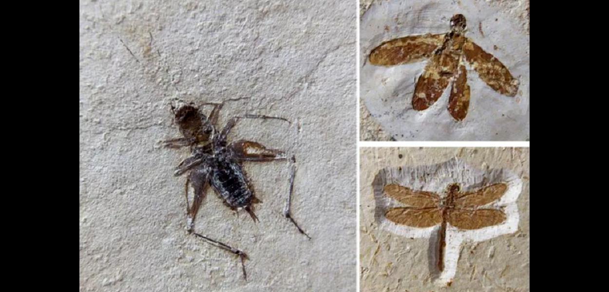 Fósseis achados no Ceará e contrabandeados na Europa são vendidos por até 100 mil euros.