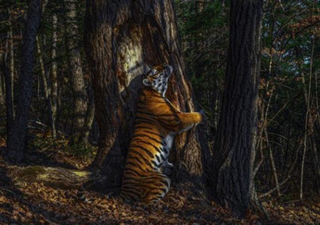 O abraço da tigresa