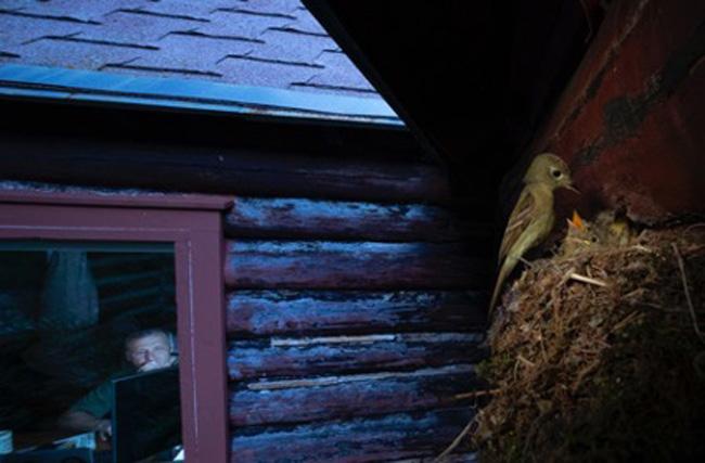 O ninho na janela